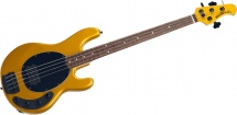 Music Man Stingray H 3 Eq Firemist Gold Rosewood Matching Hd Black Matte